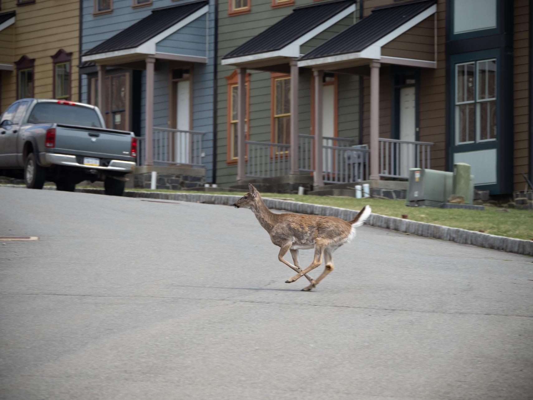 A deer careens through a half-constructed housing development.