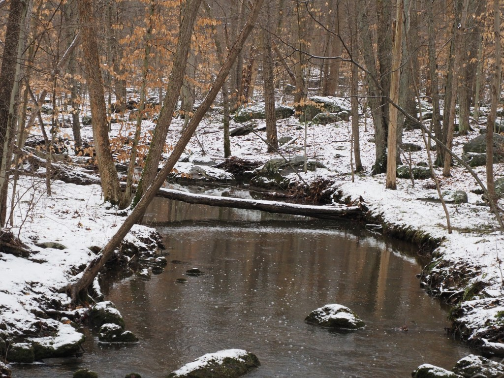 French Creek after snowfall -- more of this to come.