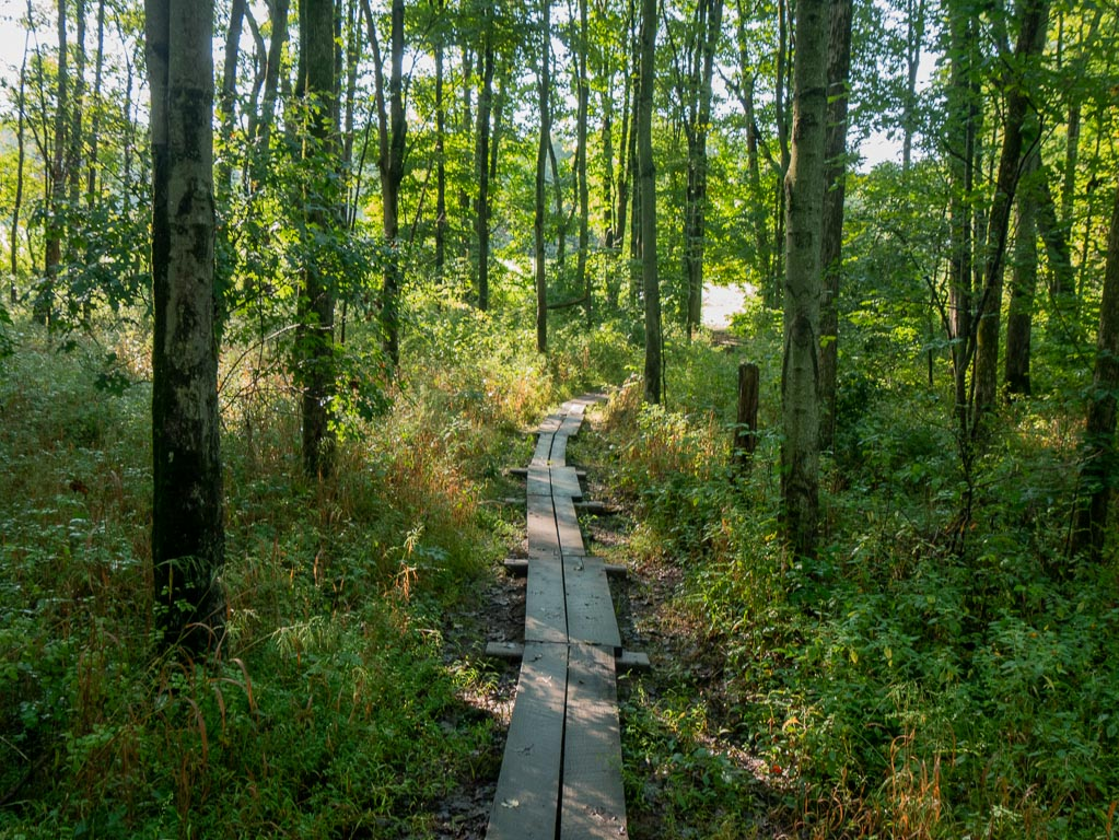 Planks nearer the creek