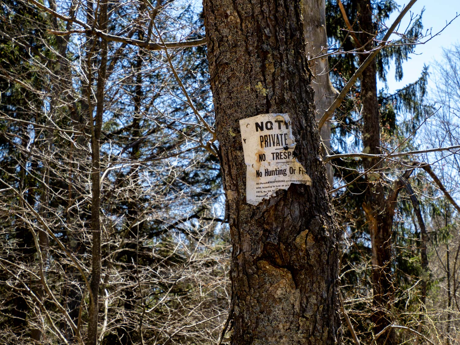 One of many NO TRESPASSING signs marking the boundaries of the Pinchot State Forest.