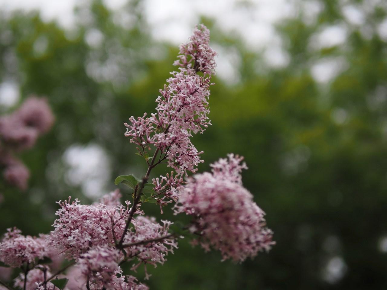Ghastly flower.
