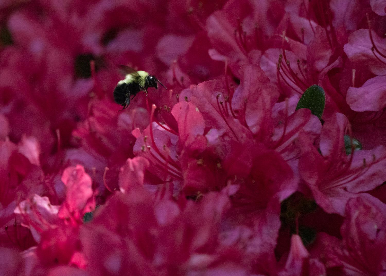 Ghastly bee.