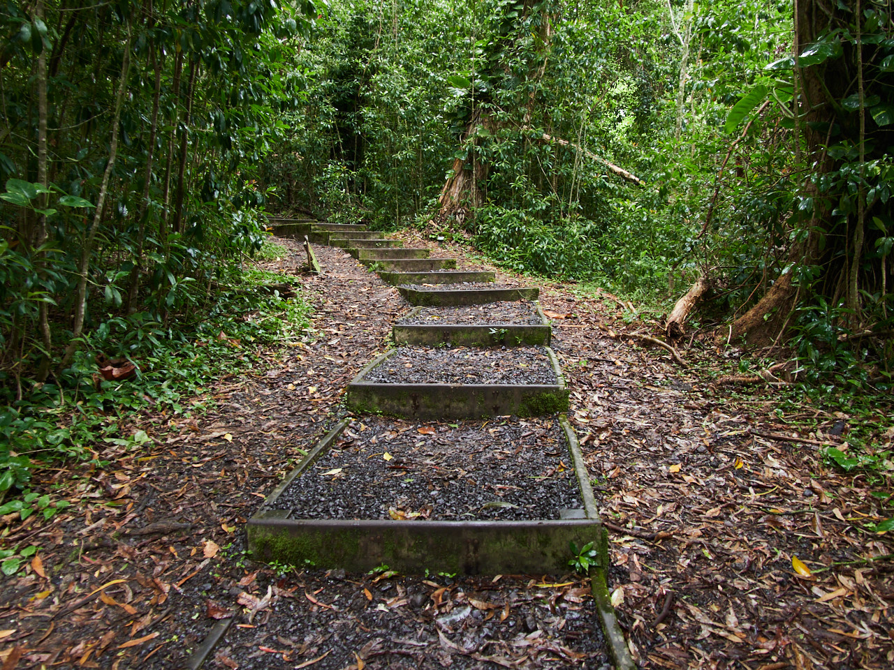 Considering the presence of some big steps, the trail is quite easy and accessible to those who can walk.