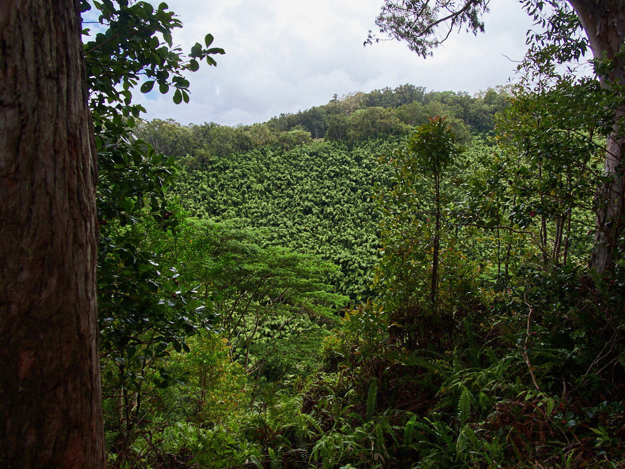 The views that do exist are of lush, tropical forests.