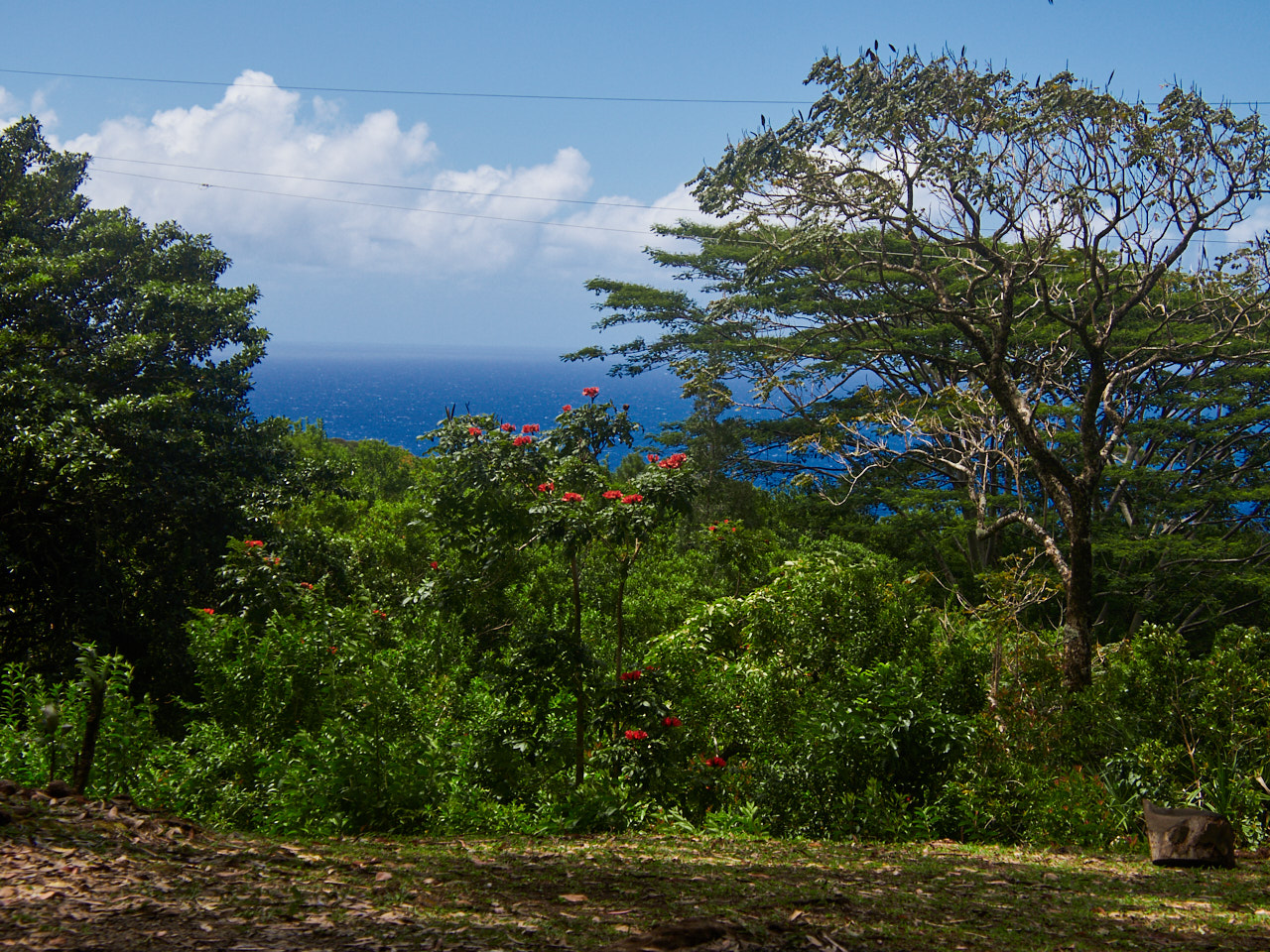 This view is from a picnic area, which would be a lovely place to relax and enjoy a snack.