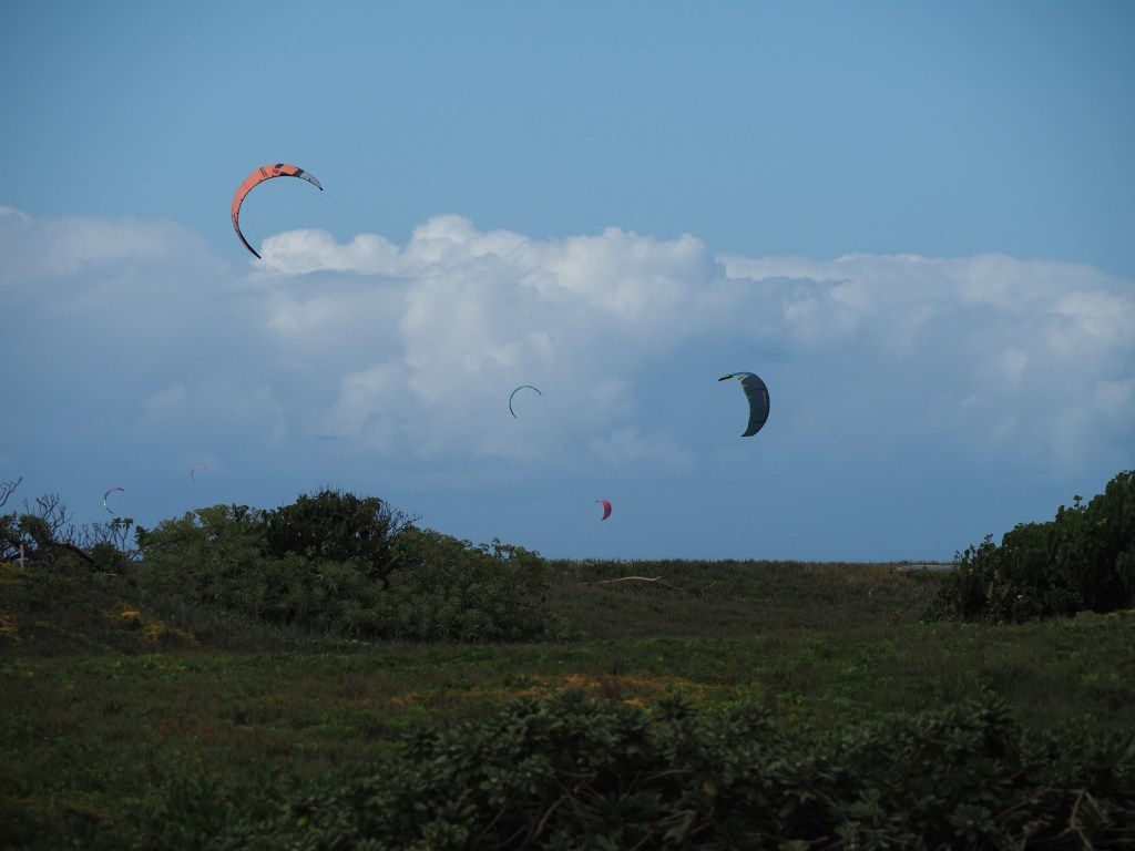 Wind sails on the other side of a hill, presumably being flown at Kanaha Beach Park, near the airport.
