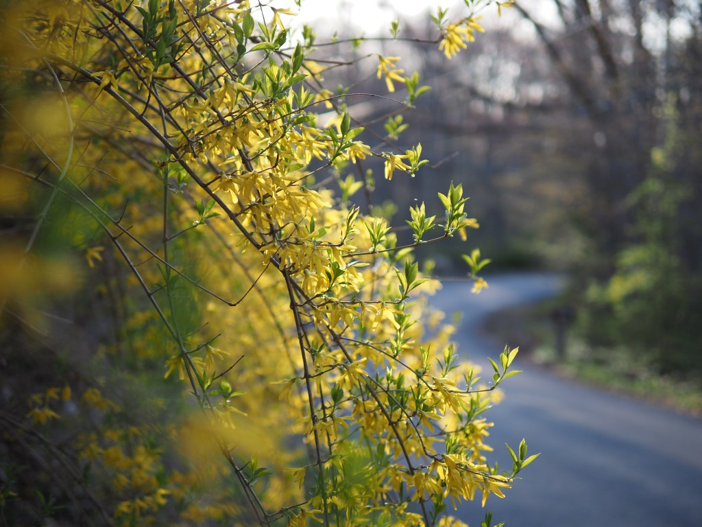 yellow af