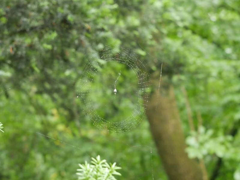 Various shots of a wet spiderweb.