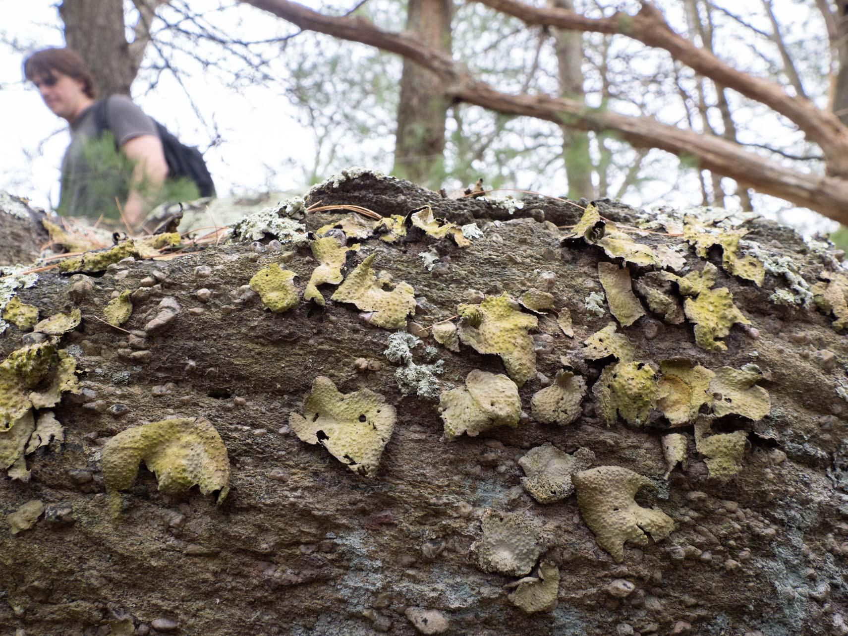 I <3 Lichen
