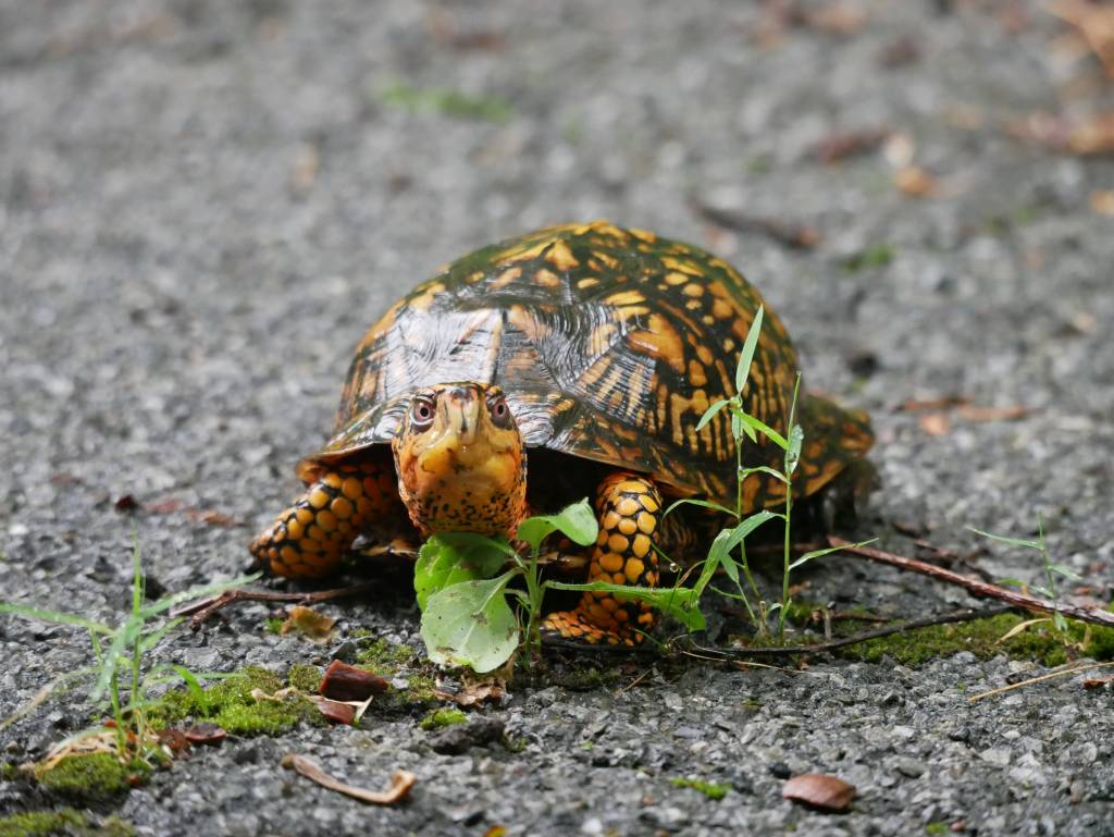 This turtle might know what's going on...