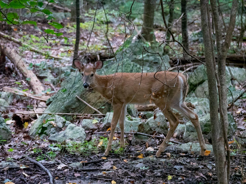 Nothing like the 'let's focus on the branch in front of the deer shot.'