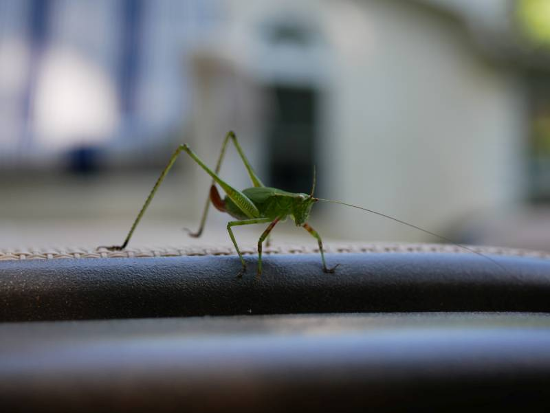 A little closer! I'm not doing magic, just waving a 30mm lens in the bug's face.