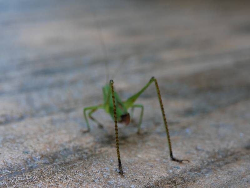 Our narrow focus plane is focused on the back legs, which provide the JUMPING POWER of the little green beast!